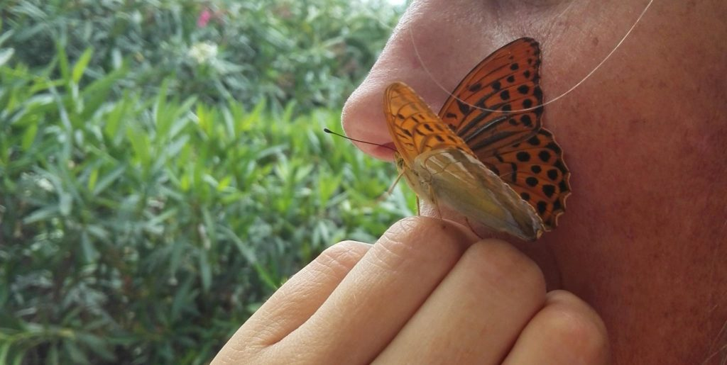 papillon reliance