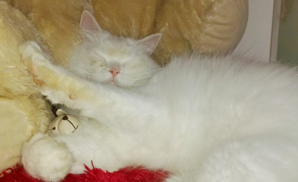 ronron thérapie - le chat thérapeute